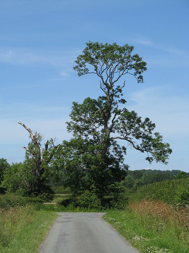 Near Rossett (Clwyd)