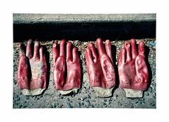 Caught RED handed ! (CJS*64) Tags: traffordpark salford goves rubber dslr d7000 nikon nikkorlens nikkor nikond7000 50mmf18lens 50mmnikkorlens 50mmf18d red hands handsup cjs64 craigsunter cjs