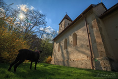 My beautiful CC at the Church of Light (Neferkheperure) Tags: dog canecorso black church gothic hdr sunny fabulous grass forest nature hidden