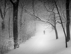 Skiing at Mont Royal park - Montreal (nicolaspika) Tags: amazing blackandwhite blackandwhitephotography canada crosscountryskiing holiday landscape landscapephotography montreal montroyal nature olympus skiing snow snowing storm travel traveller travelphotography trees trip vacation winter