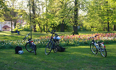 07-IMG_8843 (hemingwayfoto) Tags: blühen blüte blume fahrrad farben gartenblume narcissen natur park pflanze rethen tulpe