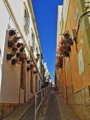 Almería 12 Calle (ferlomu) Tags: almeria andalucia calle ferlomu flor flower