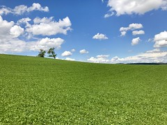 Bergdietikon im Mai (krueesch) Tags: bergdietikon wiese natur mai baum himmel wolken farbenspiel farbenpracht colours nature