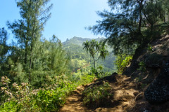 Kaui 243 DSC03778 (cpburt) Tags: kauai hawaii napalicoast kalalautrail trail