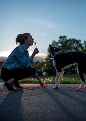 Playing with the dog (mripp) Tags: art kunst sky himmel summer sommer dog hund animal animals there tier hastier hundeschule girl playing outside drausen walking contra sun street strafe leica m10 summilux 50mm
