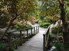 Clyne in Bloom Mid-May 2017 (9) (goweravig) Tags: azaleas flowers blooms swansea wales uk maylas parks gardens clynegardens clyne bridge footbridge