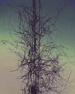 electric tangle
