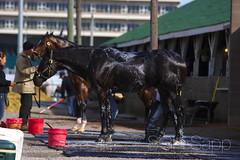 IMG_8331_01 (Sagrasa) Tags: churchilldowns kentucky horseracing thoroughbred