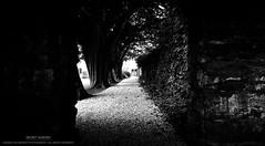Secret Garden (...She) Tags: secretgarden garden blackandwhite darknessandlight mood moody atmosphere monochrome bw trees shadowsandlight