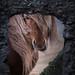Horse Portrait (Majeed Badizadegan) Tags: iceland workshop