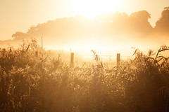 Back to the past (Edita Ruzgas. Thanks for your visit.) Tags: edita ruzgas nikon d7200 fog foggy morning early autumn fall summer countryside rural grass plants sun fence trees mist misty tranquility serenity old days quitness quite lanscape outdoors village