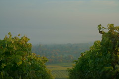 Bodennebel 2 (ES_789) Tags: herbst herbstfarben remstal fellbach morgen nebel sony a6000