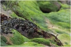Groen (HP025453)