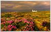 Loop Head (tippjim) Tags: lighthouse loophead coclare westclare wildatlanticway tippjim heather seascapes ireland lahinch nikond810 nikon2470 sunset sky seapink