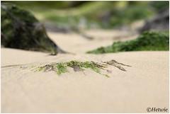 algen in het zand (HP025454)