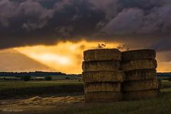 Luz tras la tormenta (allabar8769) Tags: alpacas campos camposdecastilla cigales naturalezarioalardelrey paisaje valladolid atardecer