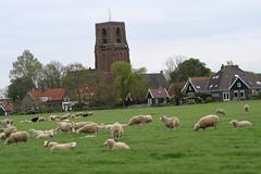 IMG_0093 (muirsr70) Tags: amsterdam geo:lat=5239457608 geo:lon=498940903 geotagged netherlands nld noordholland ransdorp