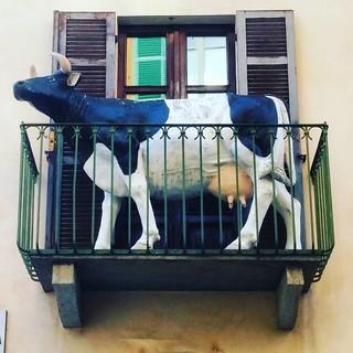 Vacca #esibizionista #biella #biellese #mucca #cow #sischerza #italy #piemonte #piedmont #ig_biella #streetart #street #sprayart #streetphotography #urban #urbanart #urbanwalls #wall #wallporn #graffitiigers #stencilart #art #graffiti #instagraffiti #inst