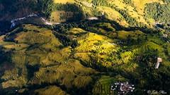 Terraced fields (Julio Phan) Tags: terraced fields pokhara nepal rice fly
