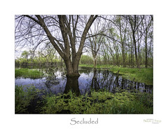 Secluded (baldwinm16) Tags: april dupagecounty forestpreserve landscape nature outdoors outside season spring springgreen pond marsh wetland bog quiet secluded peaceful natureofthingsphotography