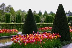 Keukenhof (jehazet) Tags: keukenhof park formalgarden tulips tulpen jehazet
