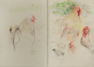 Chickens at the garden