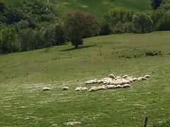 Il gregge addormentato - The flock asleep (trovado73) Tags: ngc astoundingimage
