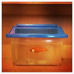 Menu E2 (haperla) Tags: raphaelfiron haperla picoftheday redfish chinese chinois restaurant miam manger yummy eat waiting attente