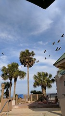 Birds overhead (mehlam) Tags: hilton head island southcarolina sc 2017 vacation marriott resort