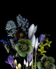 58157.01 bouquet (horticultural art) Tags: horticulturalart bouquet flowers springflowers spring scillasiberica callunavulgaris heather crocus helleborus puschkinialibanotica forsythia