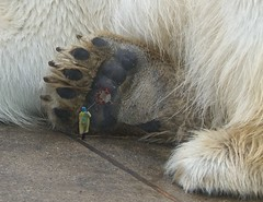 2675 (The Giant Animals) Tags: giant stomp crush squished crushed under paw foot sole