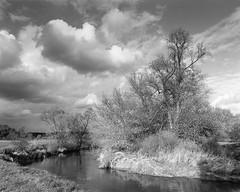 River (fotoswietokrzyskie) Tags: mamiyarz67 ilforddelta100 river medium format 6x7 analog landscape nature film tree