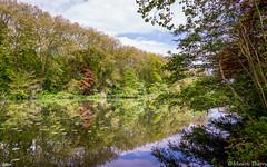 Le Rideau Nature (musette thierry) Tags: parc denghien belgique nature naturel etang promenade falowme nikon d600 reflex reflet reflets eau jardin vue panorama paysage landscape