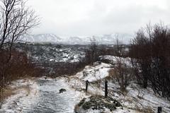 mystic Mývatn /3 (dive-angel (Karin)) Tags: mývatn mystic forrest wald snowy snow schnee winterlich winterwonderland iceland island ontourwithicelandtoursde holiday loveit