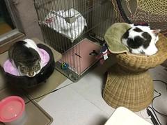 Japan Cat Network shelter (Stop carbon pollution) Tags: japan 日本 honshuu 本州 touhoku 東北 fukushimaken 福島県