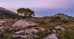 granite country (andrew.walker28) Tags: granite hills rock boulders ferns tenterfiled newsouthwales australia pink
