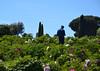 Peoniofilo (Colombaie) Tags: parco giardino peonie ventrobotanicomoutan viterbo provincia viterbese pasquetta 2017 ritratto uomo maschio dispalle sconosciuto studioso botanico cipresso