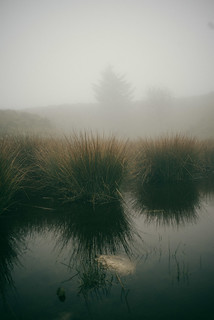 Mere in the Mist