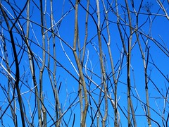 The sky among sticks (Lyam_31) Tags: sky sticks twigs plants tree
