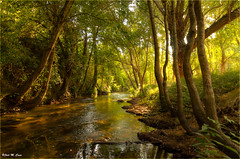 Río Duratón (Sepúlveda-Segovia) (Jose Manuel Cano) Tags: río river duratón sepúlveda segovia españa spain nikond5100 árbol tree agua water bosque wood