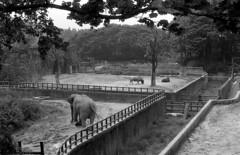 1467195681 (YJ-Lee) Tags: korea zoo