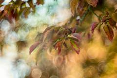 Feelings (hpnew) Tags: pentacon prime projection spring trioplan leaves leaf nature nikon vintage flowers