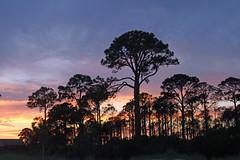 Alligator Point, Florida (North Florida Girl) Tags: alligatorpointfl gulfcoast gulfofmexico sunset