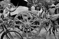 Photographer Raghu Rai 31673081241 (যুদ্ধদলিল) Tags: 1970s animal asia asie asiedusud bangladesh bicycle bicyclette blackandwhite calèche candid carriage cart charrette child day enfant eurasia extérieur exterior face féminin fulllength groupofpeople groupe indian lookingatcamera manallages masculin midadult parapluie processed senioradult socialgroup socialissues southasia umbrella visage womanallages youngadult