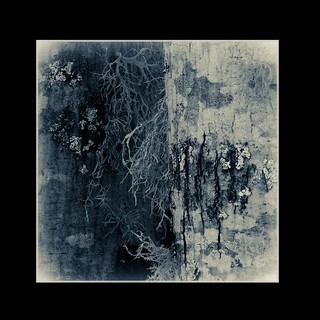 May17 Lichen
