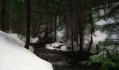 winter's end... (Alvin Harp) Tags: ca89 ca44 lassennationalforest california foreststream winterscene snowy mountainstream naturesbeauty march 2017 sonyilce7rm2 fe41635zaoss hiking deepsnow adventure alvinharp