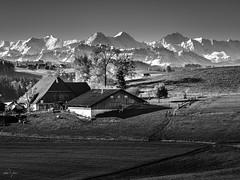 """Bauernhof """"Weid"""" mit Sicht auf die Alpen (uhu's pics) Tags: affoltern bw landscape landschaft cows farm mountains prealps switzerland suisse weide kühe bauernhof berge alpen voralpen emmental schweiz 90mm fujinon fujifilm fuji xpro xpro2 xp2"""