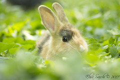 What's up? (Elisa Sanchi) Tags: what is up bunny rabbit che ce coniglio coniglietto verde green park parco