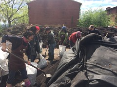 Bagging compost for the Columbia Secondary School Street Tree care event on 5.9.17