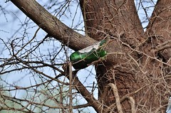 Littering - i have seen a lot of beer bottle which has broken in hesaraghatta lake (Smevin Paul) Tags: hesaraghatta lake may 2017 littering have seen lot beer bottle which has broken tree thrown smevin paul smevinpaul smevinsphotography smevinpaulphotography smevinsphotos smevinsphotographs smevinpictures smevinspictures thrisookaran passion photography